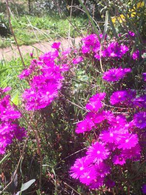 flowers-1-quinta-da-fonte-portugal